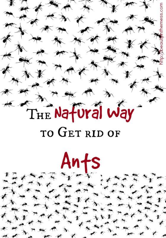 The Natural Way to Get Rid of Ants