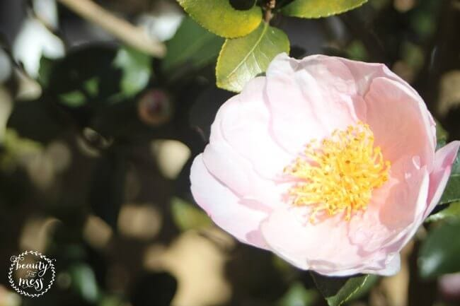 Flower Nature Study