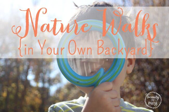 Nature Walks in your own Backyard