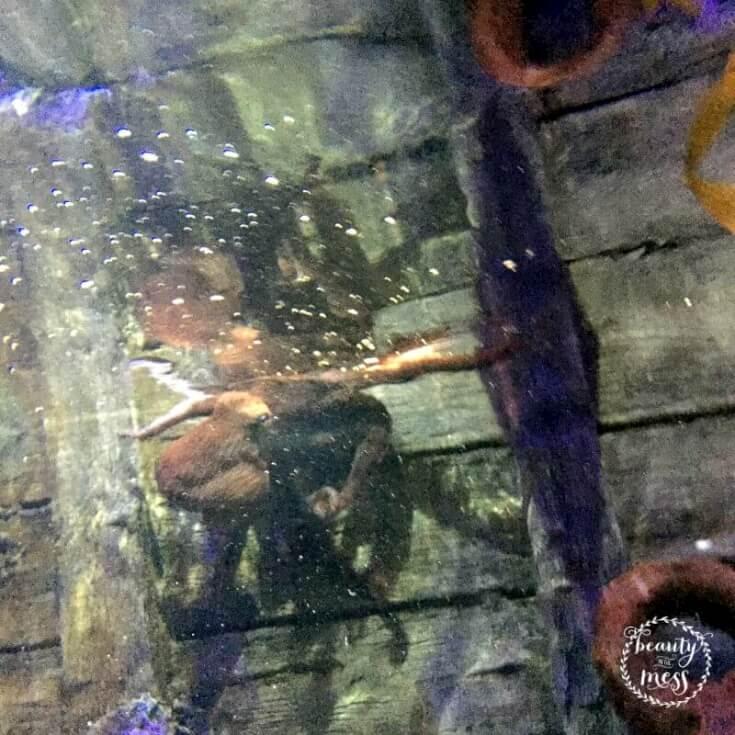 Octopus Enrichment Program At Sea Life Aquarium