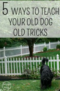 5 Ways to Teach Your Old Dog Old Tricks