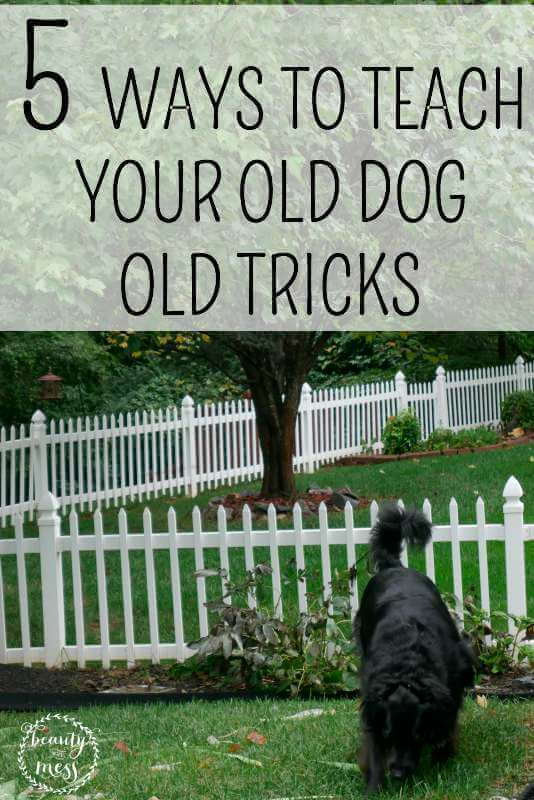 5 WAYS TO TEACH YOUR OLD DOG OLD TRICKS-2