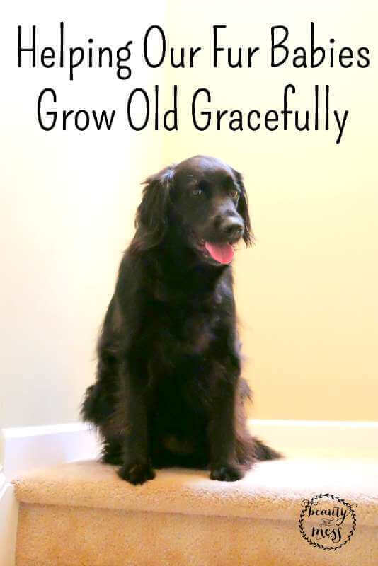 Helping Our Fur Babies Grow Old Gracefully