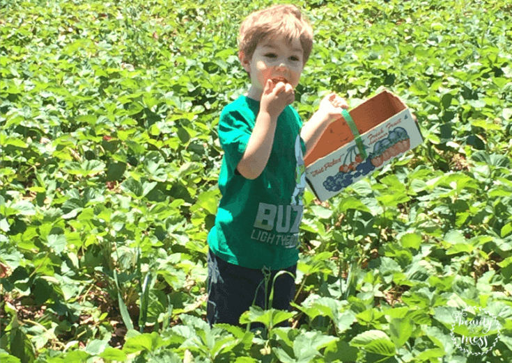 Picking and Eating Strawberries