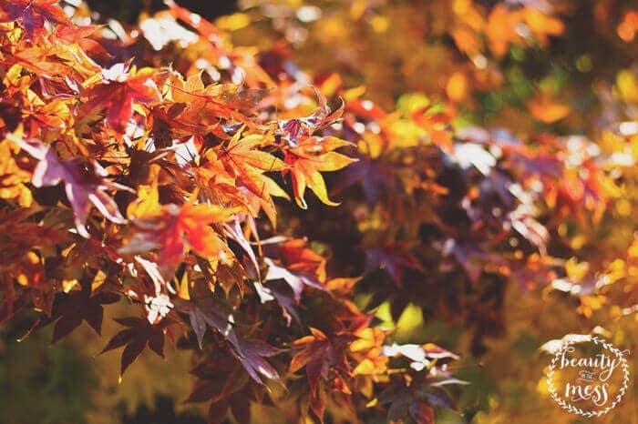 Fall Wreath 1 (1)