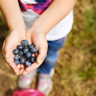 Family Activities in the Spring Blueberry picking
