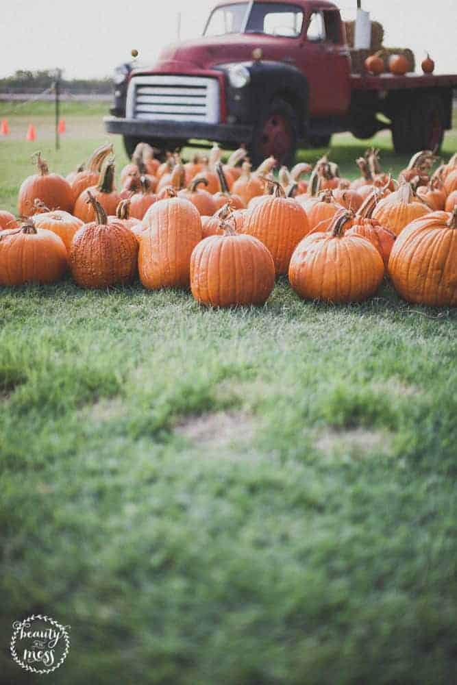 Looking for fall activities to do with your family? Check out this list of Fall Bucket List ideas for the whole family.
