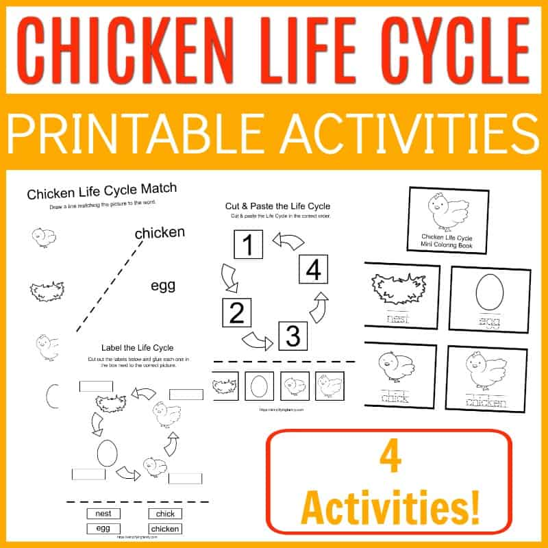 chicken life cycle printable activities