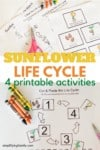 Sunflower Life Cycle Printable